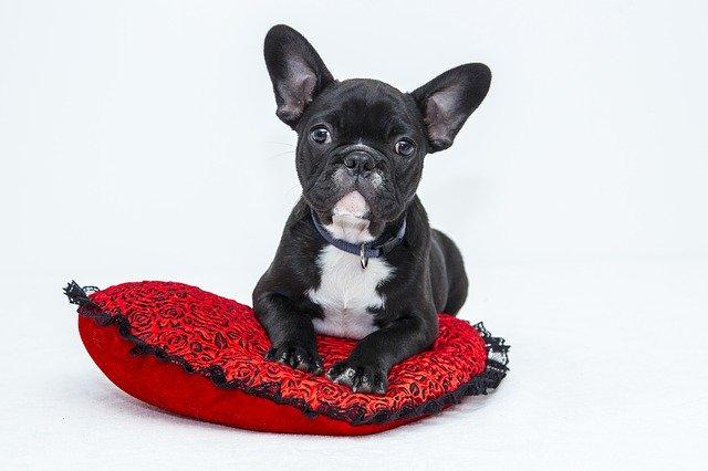 hund med hundehalsbånd